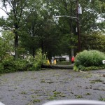 TREE COVERS STREET AND DRIVEWAY KIVY ST
