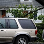 TREE GOES THROUGH SUV ON EAST 10TH