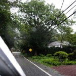 ELECTRIC LINES DOWN WHITSON AND E ROGUES