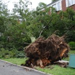 TREE UPROOTED HITS APARTMENT