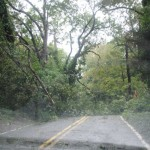 Trees close roads and take out electricity