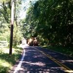 Massive tree down!