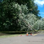 Fort Hill major tree down