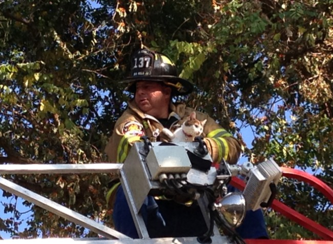 Dix Hills FD Rescues Cat From Tree